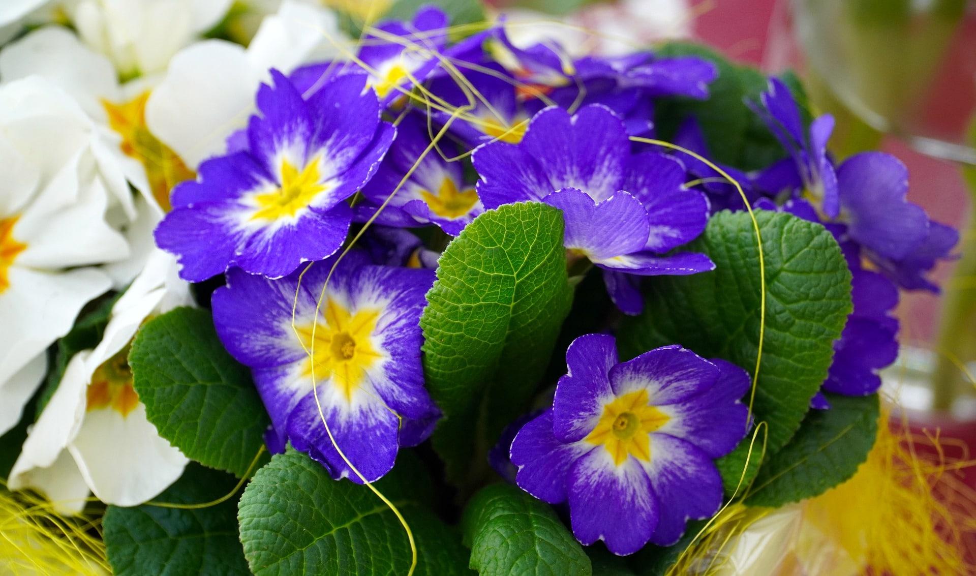 Décorer tombe au printemps avec fleurs sauvages