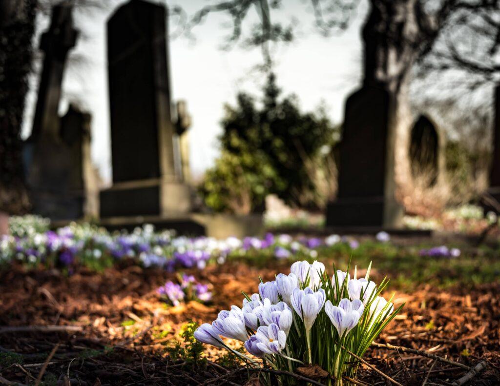 Fleurs automnales pour fleurir une tombe à la Toussaint