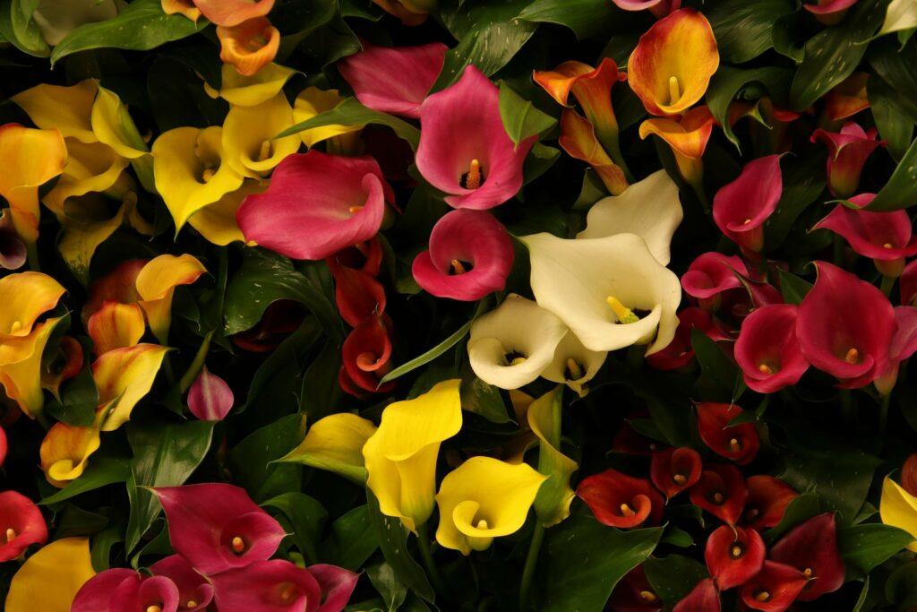 Illustration •10 plantes pour fleurir une tombe à la Toussaint