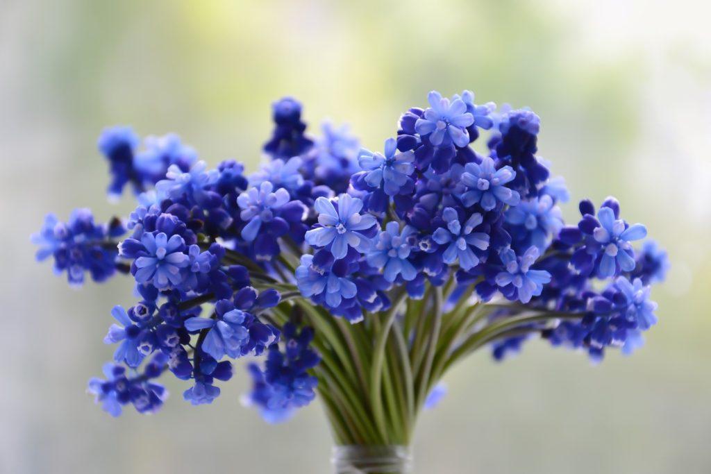 Illustration •À chaque saison ses plantes pour cimetière !
